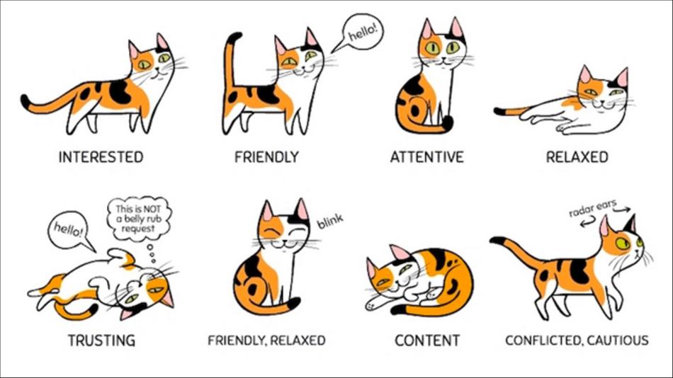 pelajari bahasa tubuh kucing