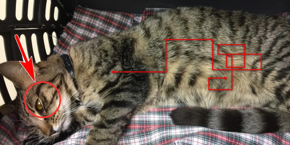 Penyakit FIP kucing gejala, penyebab & cara pengobatan